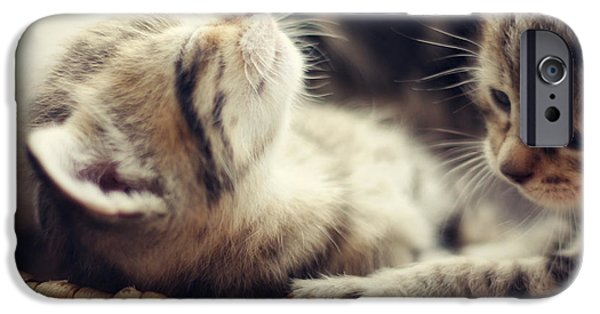 Pictures Of Cats Photographs iPhone Cases - Brotherly Love iPhone Case by Amy Tyler