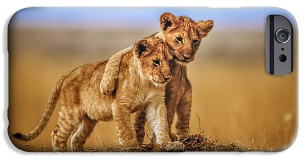 Lions Photographs iPhone Cases - Brothers For Life iPhone Case by Jeffrey C. Sink