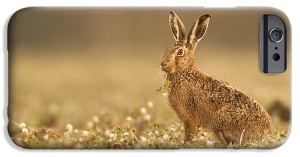 Brown Hare iPhone Cases - Brown Hare  iPhone Case by Paul Neville