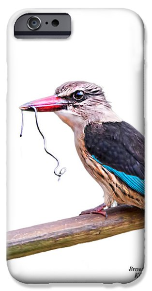 Concept Digital Art iPhone Cases - Brown Hooded Kingfisher on white iPhone Case by Ronel Broderick