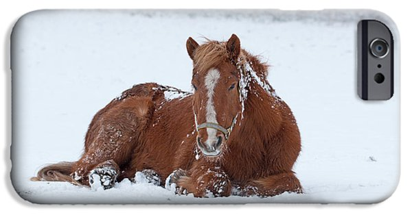 Snow iPhone Cases - Brown horse lying in the snow iPhone Case by Allan Wallberg