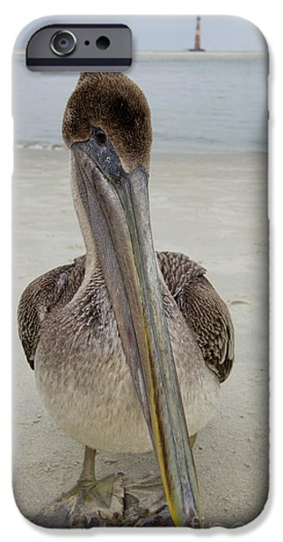 Sea Birds iPhone Cases - Brown Pelican and Lighthouse iPhone Case by Dustin K Ryan