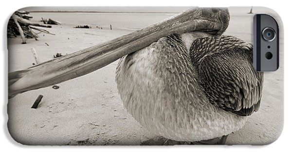 South Carolina iPhone Cases - Brown Pelican Folly Beach Morris Island Lighthouse Close Up iPhone Case by Dustin K Ryan
