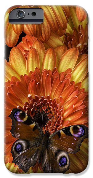 Insects Photographs iPhone Cases - Brown Spoted Wing butterfly iPhone Case by Garry Gay