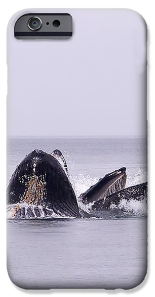 Bubble Feeding Humpbacks iPhone Case by Darcy Michaelchuk