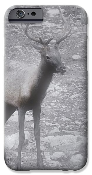 Buck in Fog on Hurricane Ridge - Olympic National Forest - Olympic National Park WA iPhone Case by Christine Till