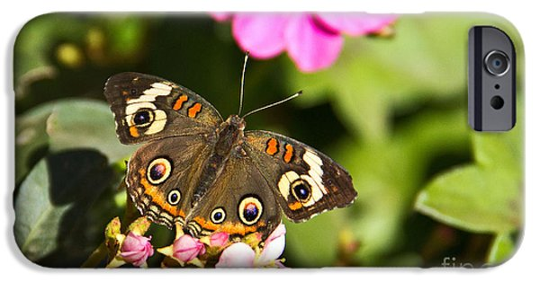 Symbol Of The Soul iPhone Cases - Buckeye Butterfly iPhone Case by Kelly Holm