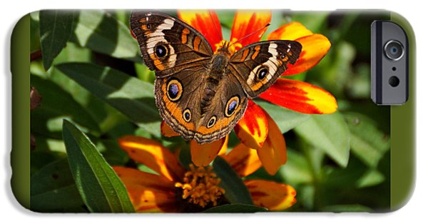 Indiana Photography iPhone Cases - Buckeye Butterfly iPhone Case by Sandy Keeton
