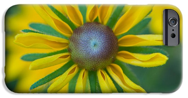 Daisy Bud iPhone Cases - Bud Breaking Daisy iPhone Case by Douglas Barnett