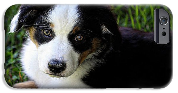 Dogs iPhone Cases - Bud The Miniature Australian Sheepdog iPhone Case by Vickie Emms