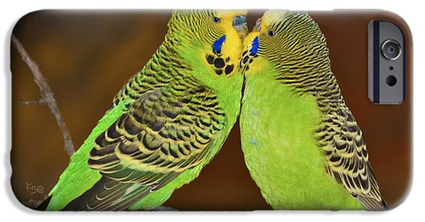 Bonding iPhone Cases - Budgie Love iPhone Case by Krys Bailey