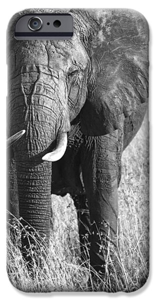 Elephants iPhone Cases - BULL ELEPHANT of TANZANIA iPhone Case by Daniel Hagerman