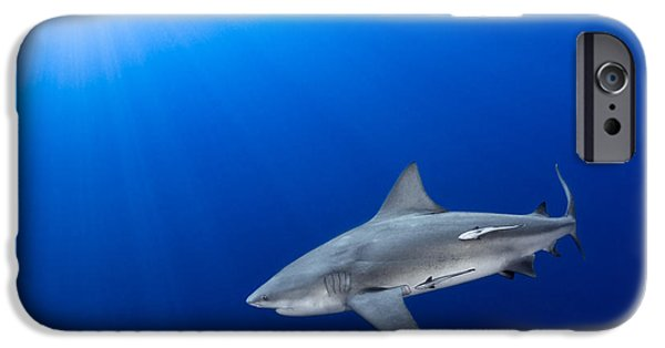 Shark Pyrography iPhone Cases - Bull Shark In The Blue iPhone Case by Ricardo  Ramos