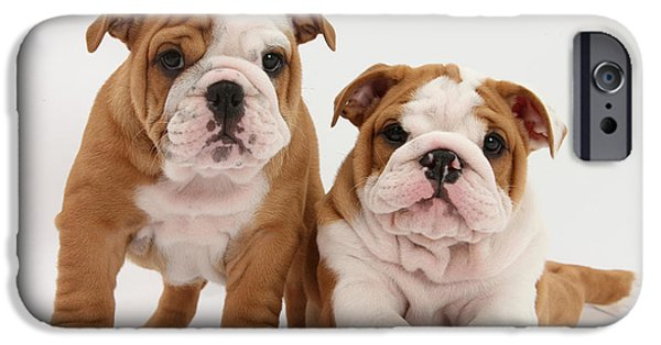 Domesticated Animals iPhone Cases - Bulldog Puppies iPhone Case by Mark Taylor
