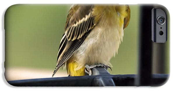 Beauty Mark iPhone Cases - Bullocks Oriole iPhone Case by Janice Rae Pariza