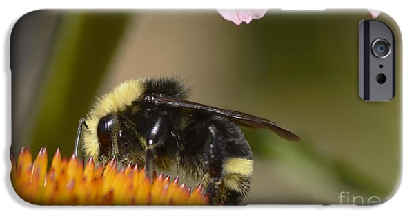 Fauna iPhone Cases - Bumble Bee iPhone Case by Marv Vandehey