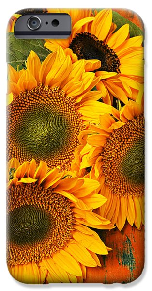 Petals iPhone Cases - Bunch of sunflowers iPhone Case by Garry Gay