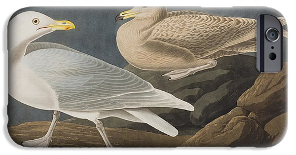 Seagull iPhone Cases - Burgomaster Gull iPhone Case by John James Audubon