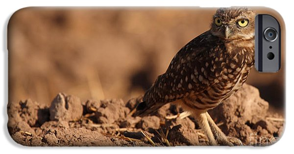 Small iPhone Cases - Burrowing Owl Looking Back Over Shoulder iPhone Case by Max Allen