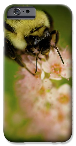 Insect iPhone Cases - Busy Bee iPhone Case by Sebastian Musial