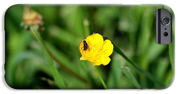 Meadow Photographs iPhone Cases - Buttercup and Fly iPhone Case by Melva Roberts
