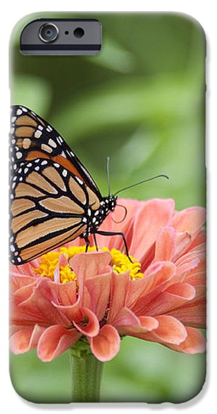 Butterflies and Blossoms iPhone Case by Bill Cannon