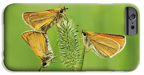Matting Photographs iPhone Cases - Butterflies iPhone Case by Mircea Costina Photography