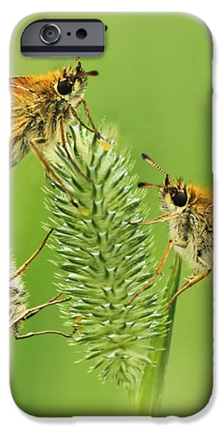 Butterflies iPhone Case by Mircea Costina Photography