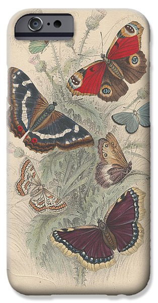 Botanical Drawings iPhone Cases - Butterflies iPhone Case by Oliver Goldsmith