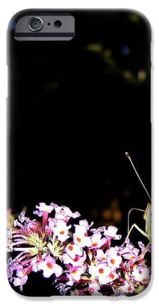 Butterfly Banquet 1 iPhone Case by Will Borden