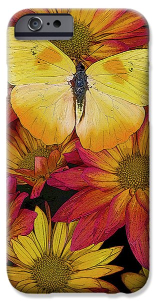 Plant iPhone Cases - Butterfly Detail iPhone Case by JQ Licensing