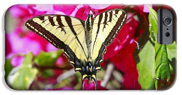 Bugs Pyrography iPhone Cases - Butterfly Feeding iPhone Case by Shoal Hollingsworth