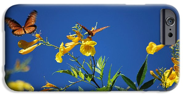 Bloosom iPhone Cases - Butterfly in the Sonoran Desert Musuem iPhone Case by Donna Van Vlack