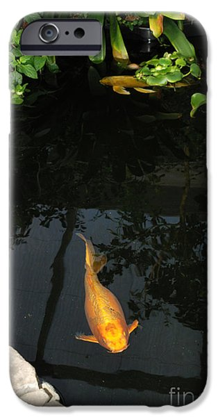 Butterfly Koi iPhone Cases - Butterfly Koi In Pond iPhone Case by John Kaprielian