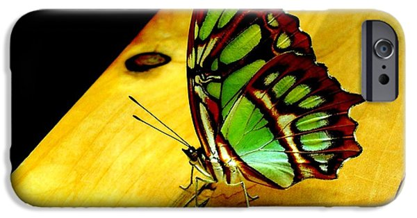 San Francisco Cali iPhone Cases - Butterfly iPhone Case by Mike Grubb