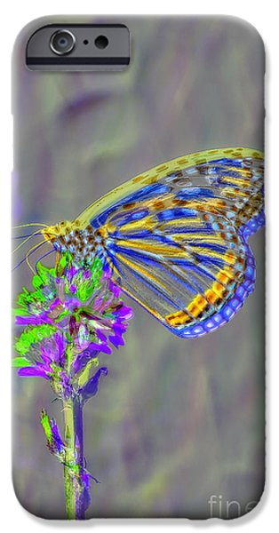 Nature Study iPhone Cases - Butterfly Study iPhone Case by Mitch Shindelbower