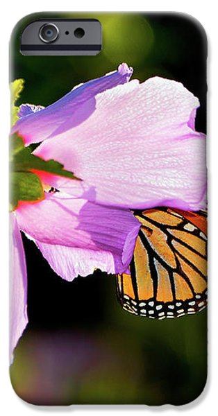 Butterfly Sunset iPhone Case by Betty LaRue