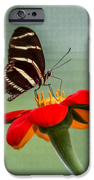 Stripes iPhone Cases - Butterfly Zebra Longwing on Zinnia iPhone Case by Patti Deters