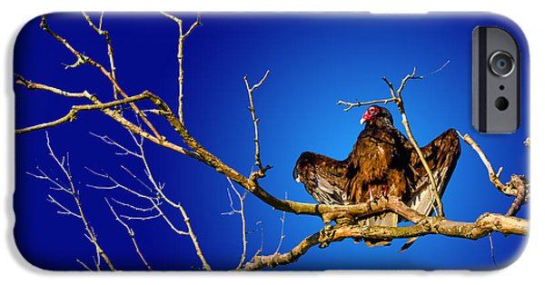 Creepy iPhone Cases - Buzzard Blues iPhone Case by Brian Stevens