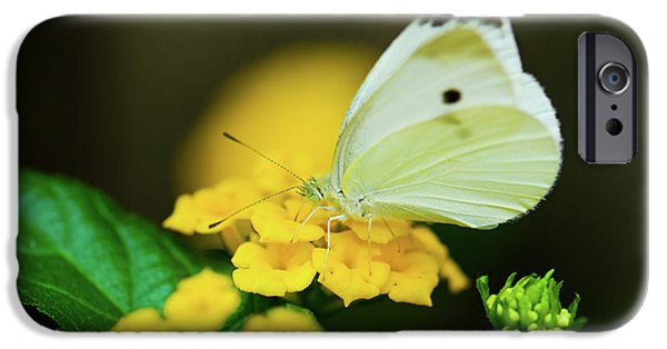 Cabbage White Butterfly iPhone Cases - Cabbage White Butterfly iPhone Case by Betty LaRue