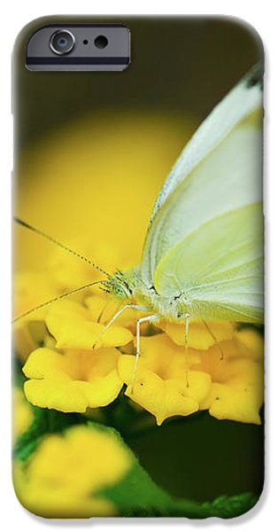 Cabbage White Butterfly iPhone Case by Betty LaRue