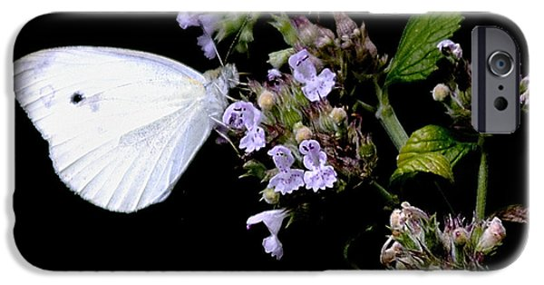 Cabbage White Butterfly iPhone Cases - Cabbage White on Catnip iPhone Case by Randy Bodkins