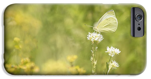 Cabbage White Butterfly iPhone Cases - Cabbage White iPhone Case by Thomas Young