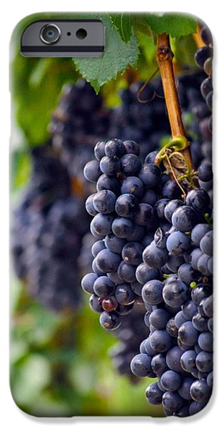 Fruit On The Vine Print iPhone Cases - Cabernet Wine Grapes iPhone Case by Kristina Deane
