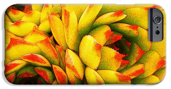 Botanical iPhone Cases - Cacti of Another color iPhone Case by Bobbie Barth