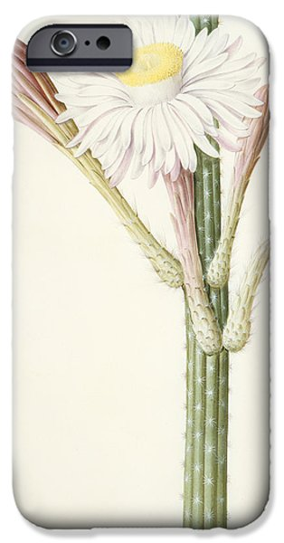 Flora Drawings iPhone Cases - Cactus Ambiguus iPhone Case by Pierre Joseph Redoute