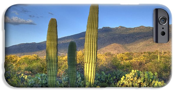 Pears iPhone Cases - Cactus desert landscape iPhone Case by Juli Scalzi