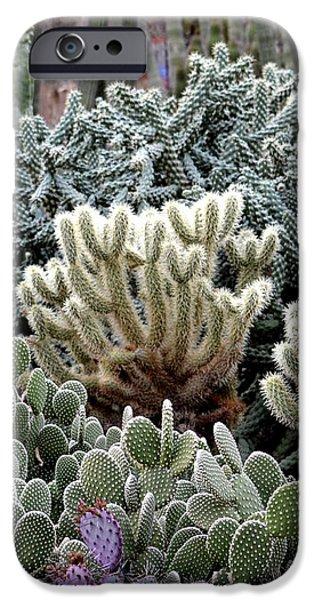 Cactus field iPhone Case by Rebecca Margraf