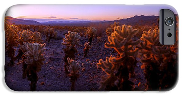 Basin iPhone Cases - Prickly iPhone Case by Chad Dutson