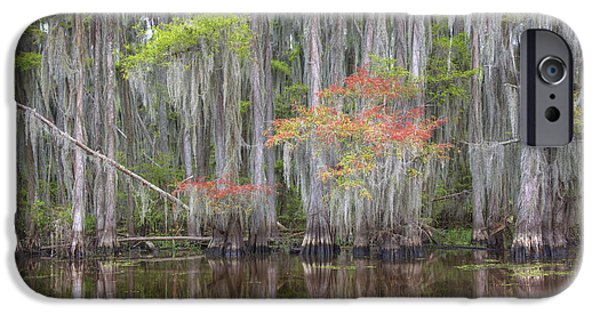 Caddo Lake iPhone Cases - Caddo Lake Colors 1 iPhone Case by Rob Greebon